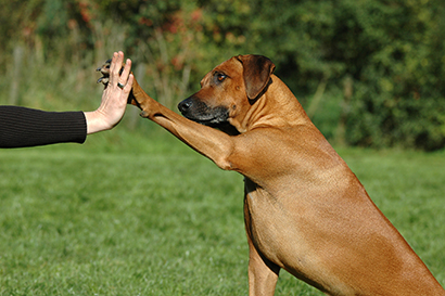 dog-pressing-his-paw-against